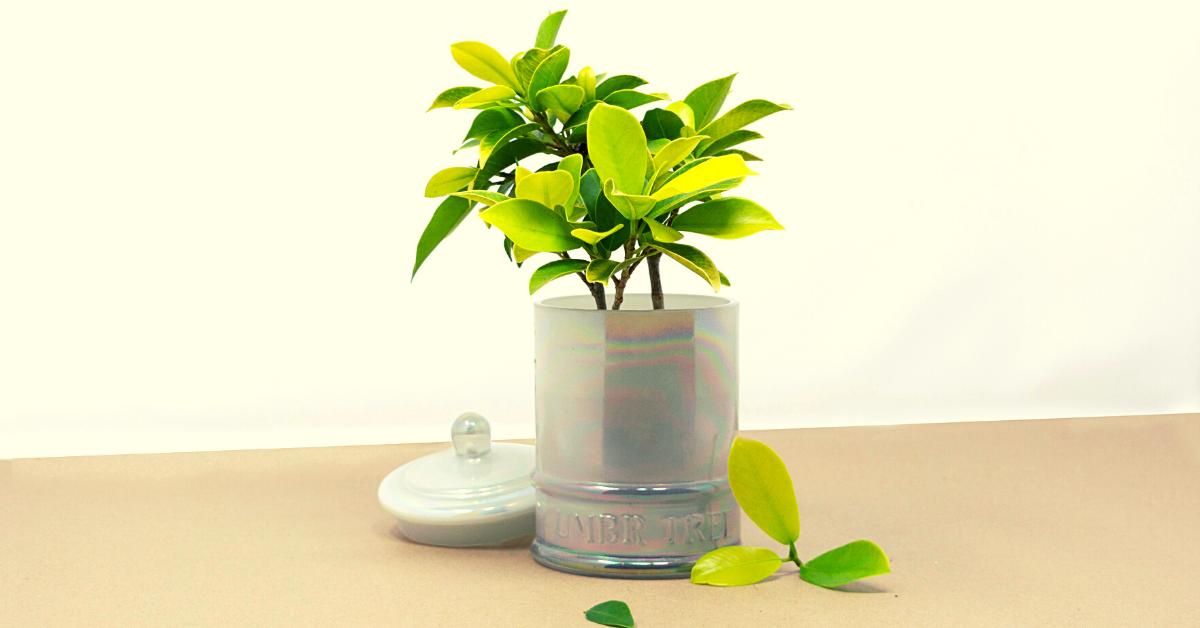 Repurpose Umbr Tree fragrance candle jar